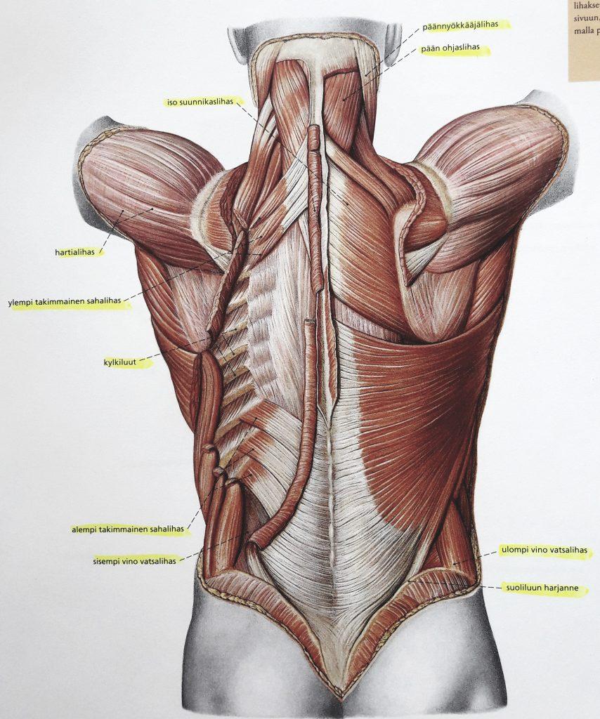 syvät selkälihakset