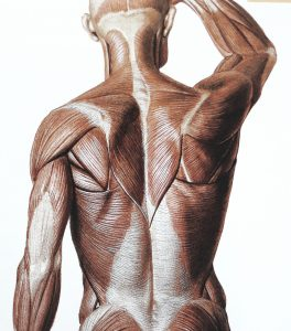 selkälihakset