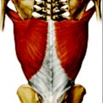 leveäselkälihas